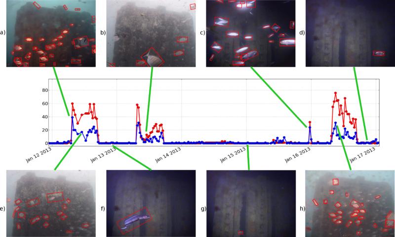 Un metodo automatico per contare i pesci del mare