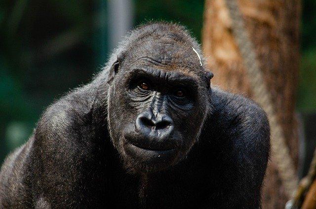 Economia… da Primati!