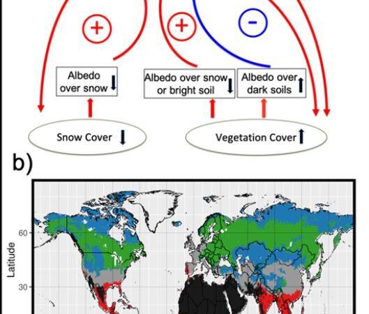 Neve e vegetazione modulano il riscaldamento climatico