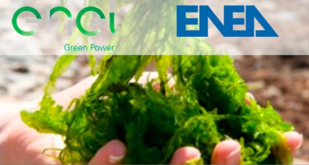 Energia: accordo tra Enel Green Power ed ENEA per innovativo impianto-pilota agrivoltaico